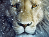 Lion Wallpapers For Ipad Image