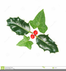 Free Clipart Of Holly Leaves And Berries Image