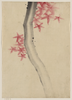 [unidentified, Possibly A Tree Branch With Red Star-shaped Leaves Or Blossoms] Image