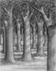 Forest Tree Sketch Image