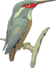 Perched Kingfisher Clip Art