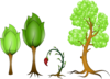 Various Trees Clip Art