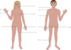 Differences Between The Man And Woman Clip Art