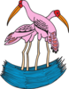 Two Flamingos In Water Clip Art