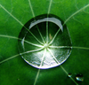 Waterdrop By Zen Image