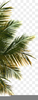 Palm Tree Png Clipart Image