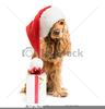 Clipart Dog With Santa Hat Image