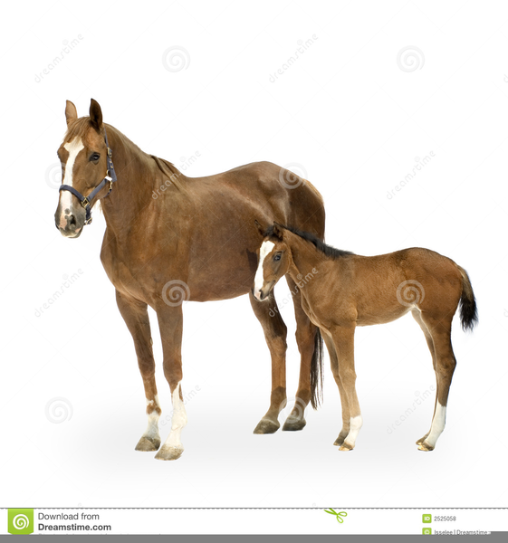 Mare and foal clipart free images at vector for Clipart mare