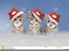 Clipart Of Cats And Kittens Image