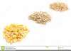 Free Grains Clipart Image