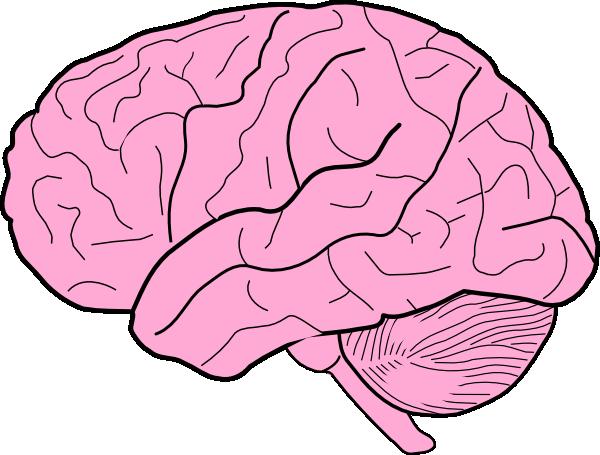brain cartoon clipart