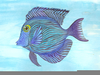 Tropical Fish Paintings Image