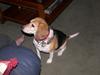 Dog Animal Pet Image