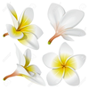 Hawaii Flower Clipart Image