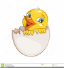 Little Bird Clipart Image