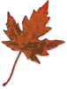 Brown Fall Leaf Clip Art