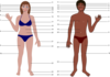 Human Body For Science Clip Art