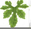 Apple Tree Leaves Clipart Image