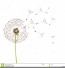 Free Blowing Dandelion Clipart Image