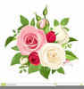 Pink Rose Clipart Border Image