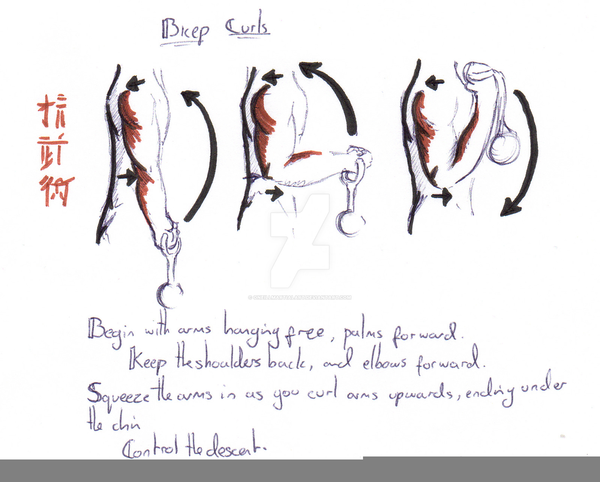 Bicep Curls Diagram Free Images At Clker Vector Clip Art