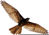 Birds Of Prey Clipart Black And White Image