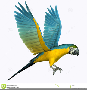 Free Parrot Clipart Image