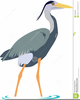 Blue Heron Clipart Image
