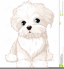 Animated Clipart Of Dogs And Cats Image