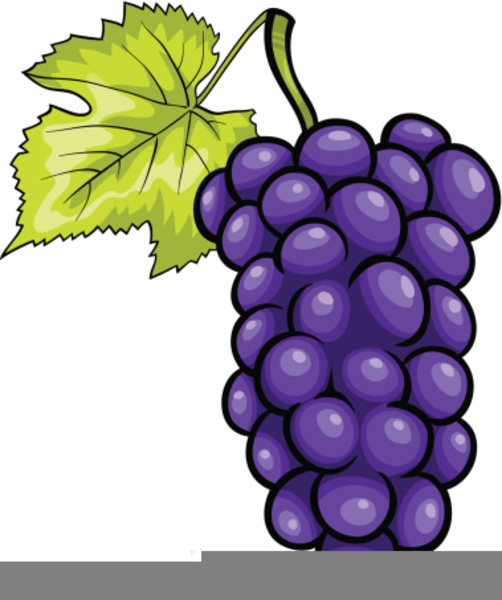 purple grapes clipart free images at clker com vector clip art rh clker com clip art grapefruit drawings free clip art grape leaf