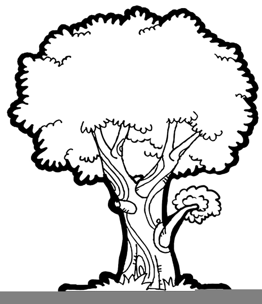 Clipart Free Oak Tree Free Images At Clker Com