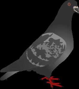 Black Pigeon Clip Art at Clker.com - vector clip art ...