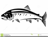Free Trout Clipart Black And White Image