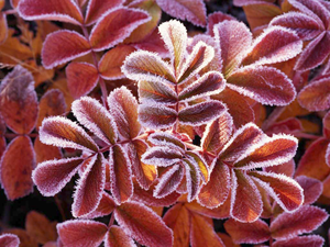 Winter Leaves Image