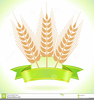 Wheat Harvest Clipart Image