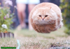 A Aaa Funny Fly Cat Image