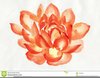 Pink And Orange Flower Clipart Image