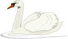 Swan Swimming Clip Art