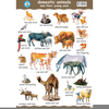 Clipart Pets Domestic Animals Image