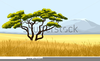 Clipart Of Acacia Tree Image
