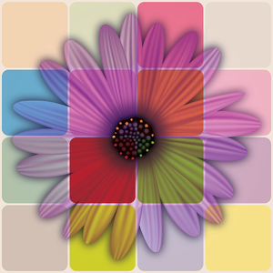 Colorful Daisy Flower 1 Image