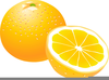 Orange Clipart Fruit Image