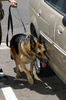 Chico, A Military Working Dog, Leads His Trainer Around A Vehicle During A Daily Training Exercise. Image