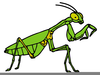 Free Clipart Praying Mantis Image