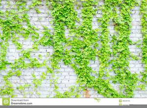 Green Vine Plants Image