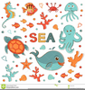 Real Sea Animal Clipart Image