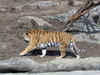 Big Cats Zoo Image