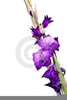 Free Clipart Gladiola Flower Image