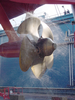 Ship Propeller Image