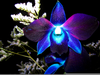 Blue Orchid Flower Image